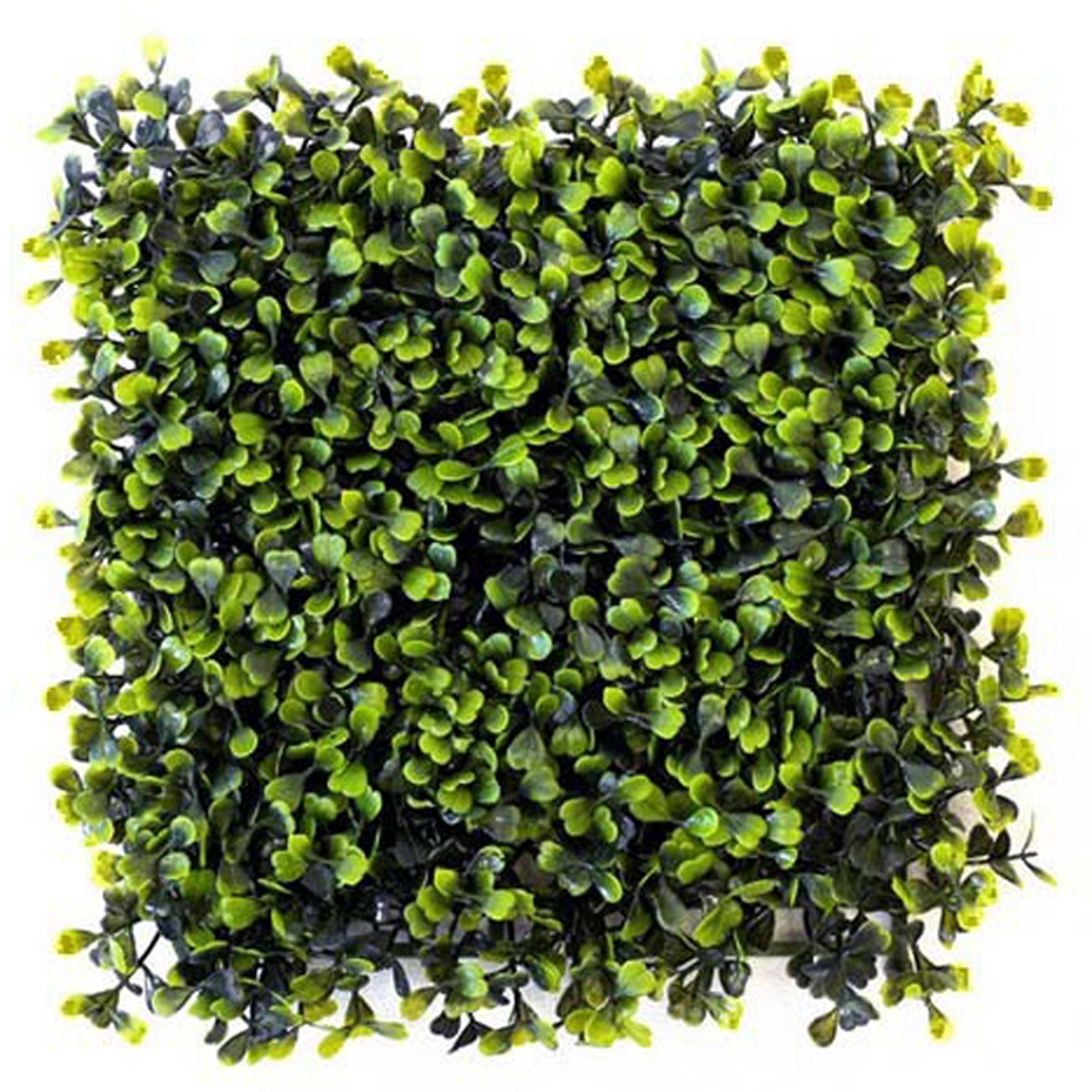 Boxwood Green Wall by Bonham & Bonham
