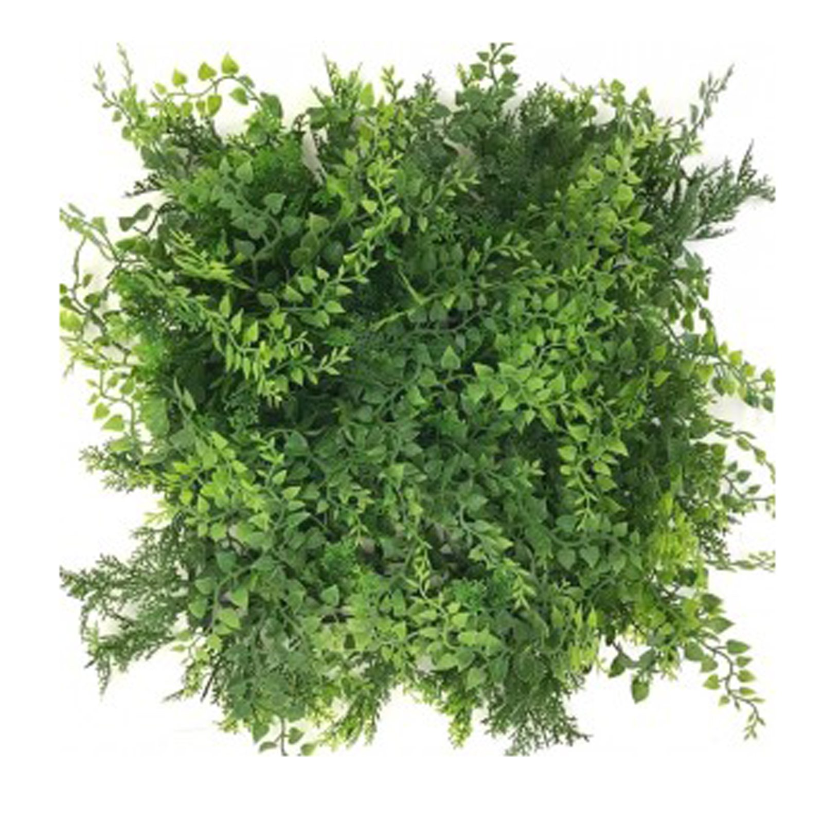 Maidenhair Green Wall by Bonham & Bonham