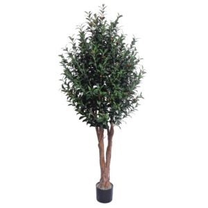 Olive Tree by Bonham & Bonham