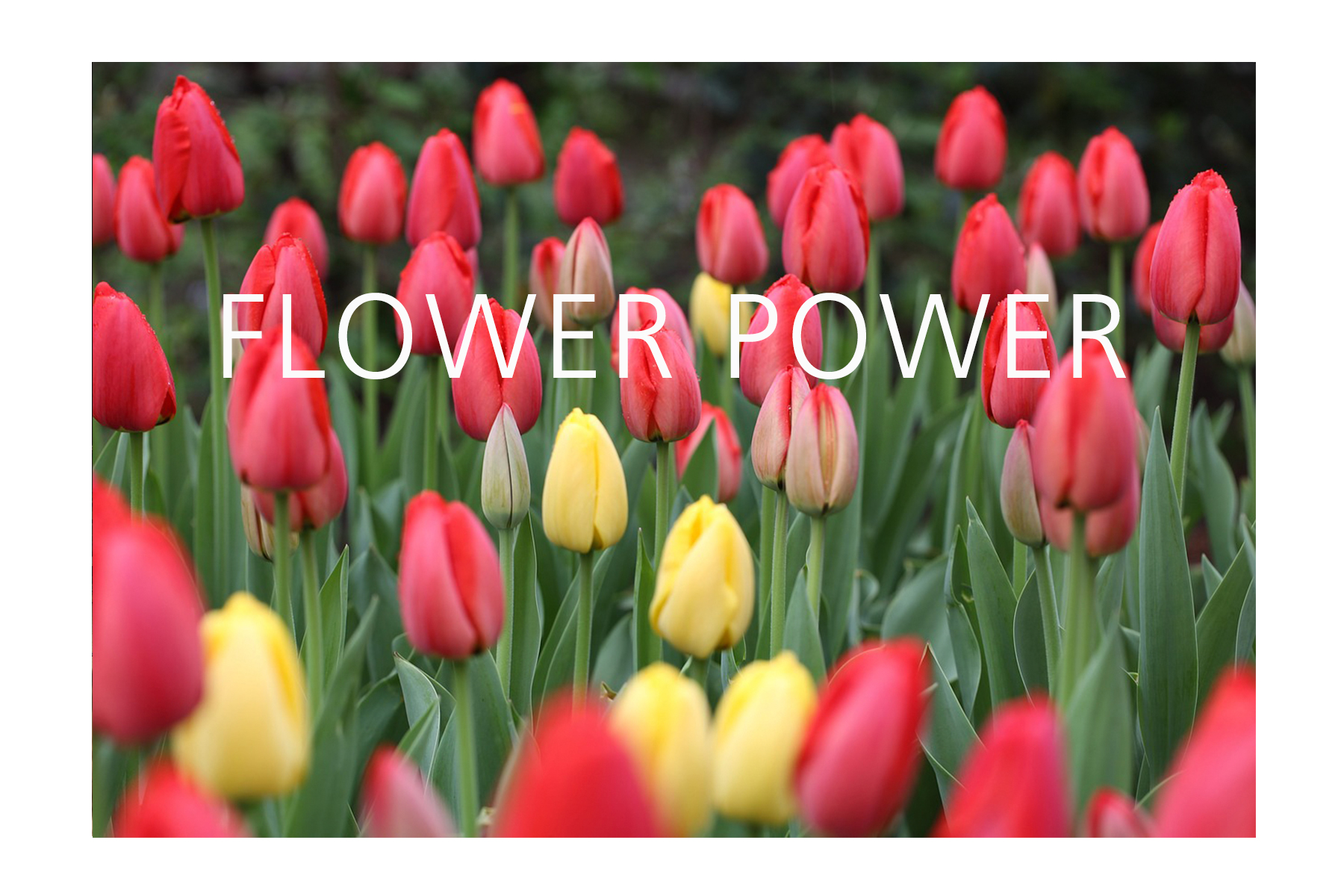 Blog-Featured-Image-FLOWERPOWER