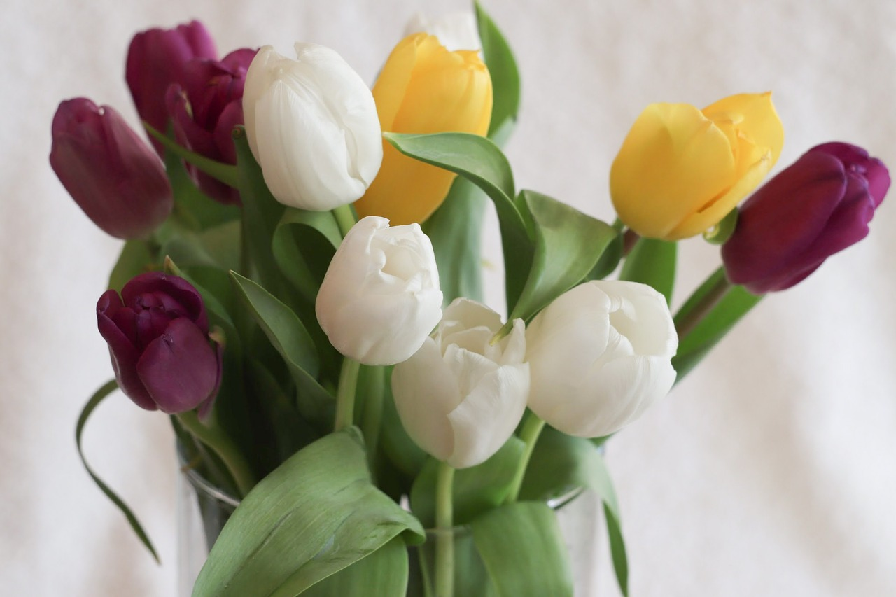 tulips-at-home